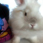 Puck the Bunny Predicts: Canadiens vs Lightning