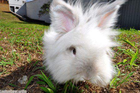 Puck the Bunny Predicts: Montreal Canadiens vs New York Rangers