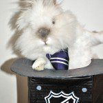 Puck the Bunny Predicts: Habs First Round Pick, NHL Entry Draft [VIDEO]