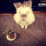 Puck the Bunny Predicts: Montreal Canadiens vs Buffalo Sabres [VIDEO]