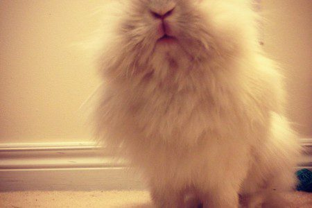 Puck the Bunny Predicts: Montreal Canadiens vs Florida Panthers [VIDEO]