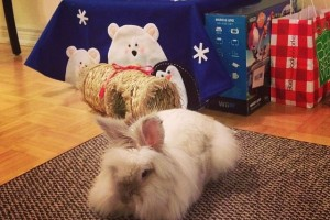 Puck the Bunny Predicts: Montreal Canadiens vs Los Angeles Kings [VIDEO]