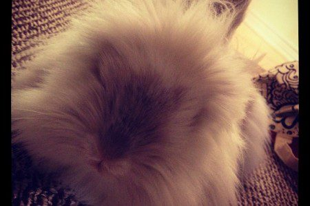 Puck the Bunny Predicts: Montreal Canadiens vs Vancouver Canucks [VIDEO]