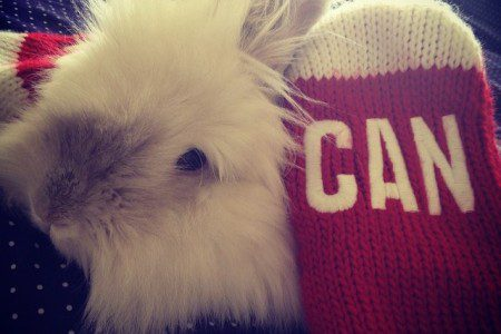 Puck The Bunny Predicts: Canada vs Sweden for Olympic Gold [VIDEO]