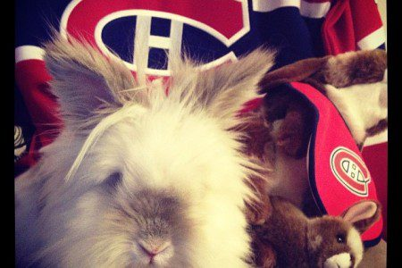 Puck the Bunny Predicts: Eastern & Western Conference Finals