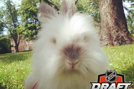 Puck the Bunny Predicts 2014 NHL Entry Draft: Habs 1st Round Pick