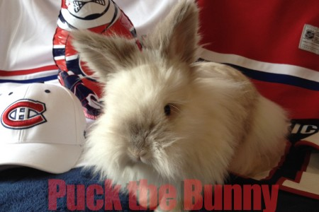 Puck the Bunny Predicts: Montreal Canadiens vs Washington Capitals