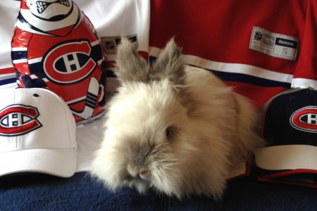 Puck the Bunny Predicts: Montreal Canadiens vs Toronto Maple Leafs [VIDEO]