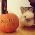 Puck the Bunny Predicts: Detroit Red Wings vs Montreal Canadiens